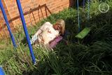 Bobbie Swings118g75r3zj.jpg